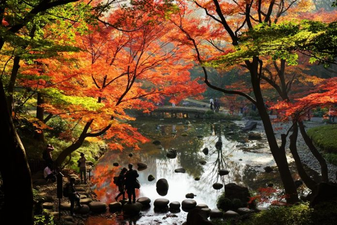 พยากรณ์ใบไม้เปลี่ยนสีในโตเกียว (Tokyo)