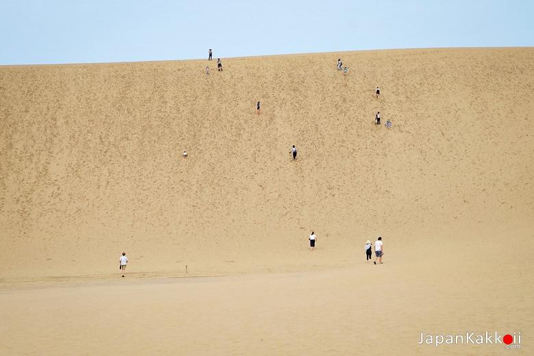 เนินทรายทตโตริ (Tottori Sand Dunes)