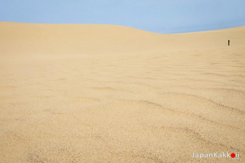 แนวคลื่นทราย