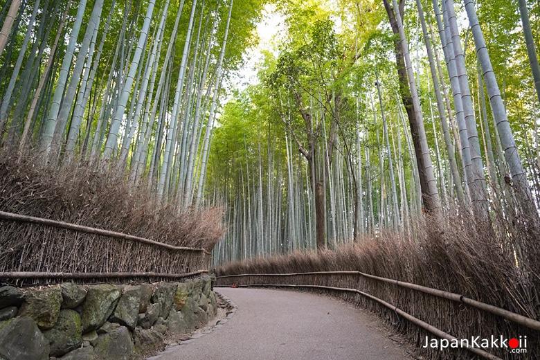 สวนป่าไผ่เกียวโต (Kyoto)