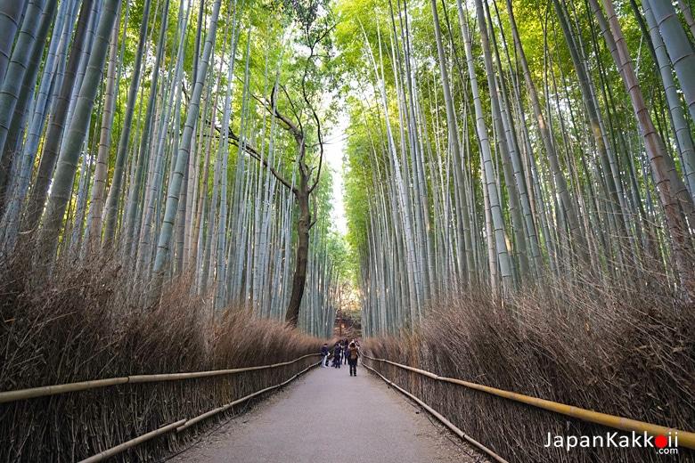 ป่าไผ่อาราชิยาม่า (Arashiyama Bamboo Grove)