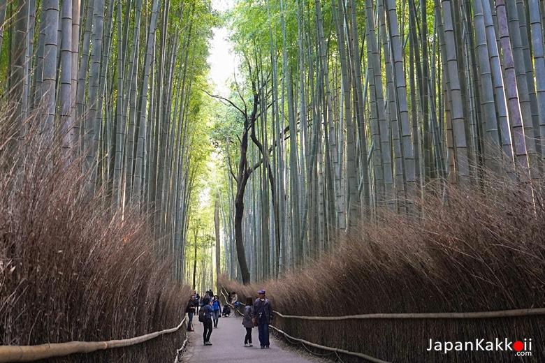 ป่าไผ่ (Bamboo Forest)
