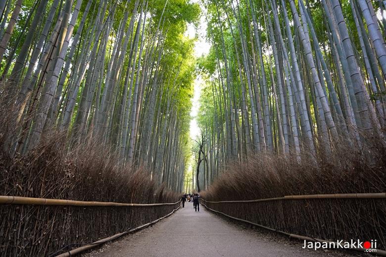 Arashiyama Chikurin no Komichi (嵐山 竹林の小径)