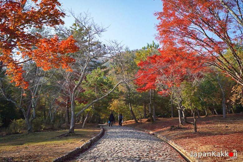 สวนคาเมะยาม่า (Kameyama Park)