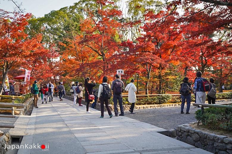 ใบไม้แดงในบริเวณวัด
