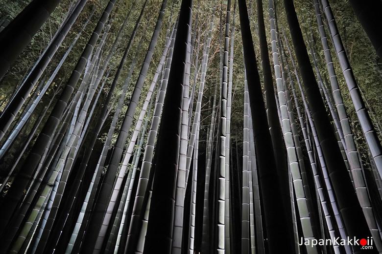 ป่าไผ่ตอนกลางคืน