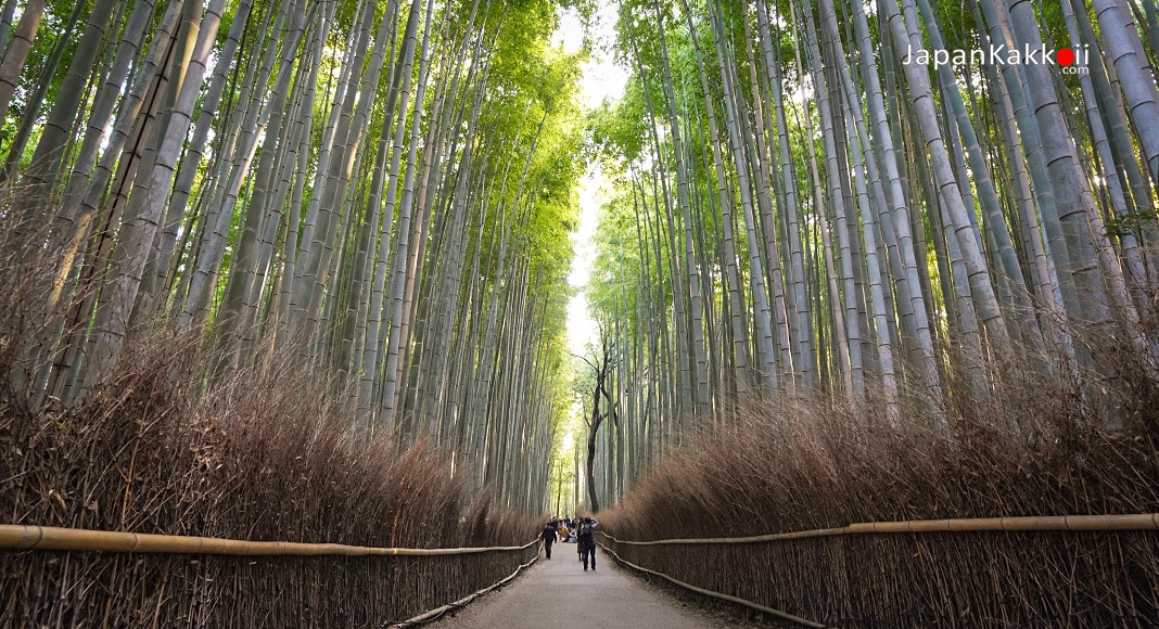 ป่าไผ่ที่อาราชิยาม่า (Arashiyama)