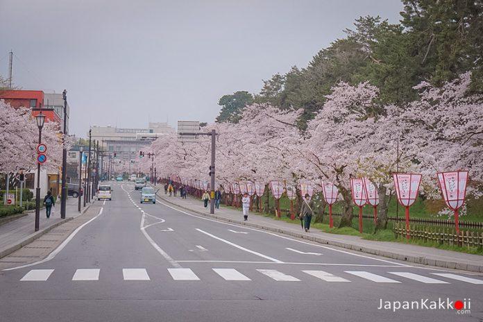 ตารางพยากรณ์ซากุระบาน 2021 ที่ญี่ปุ่น