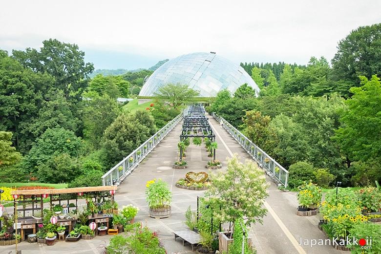 สวนดอกไม้ทตโตริ ฮานะไคโร (Tottori Hanakairo Flower Park / とっとり花回廊)