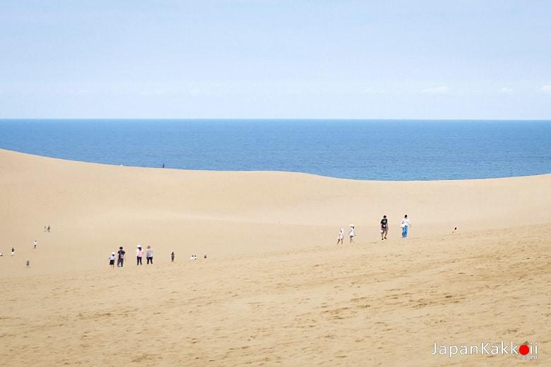 เนินทรายทตโตริ (Tottori Sand Dunes / 鳥取砂丘)